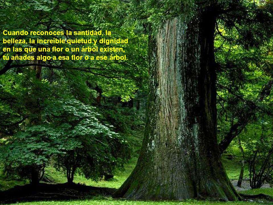 No estás separado de la naturaleza.