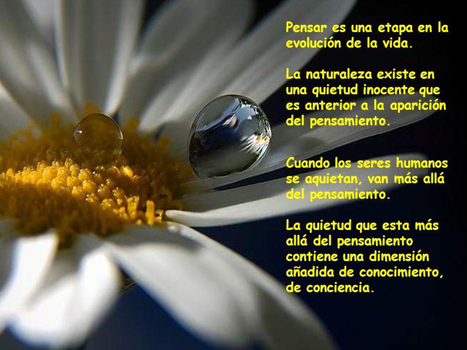 Cuando reconoces la santidad, la belleza, la increíble quietud y dignidad en las que una flor o un árbol existen, tú añades algo a esa flor o a ese ár