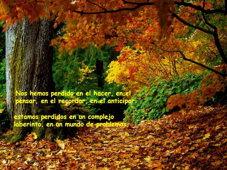 También necesitamos a la naturaleza para que nos enseñe el camino a casa, el camino de salida de la prisión de nuestras mentes.