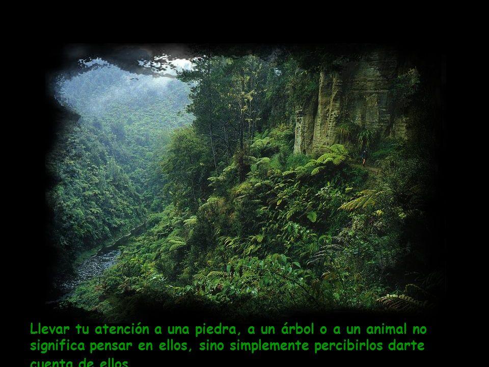 Hemos olvidado lo que las rocas, las plantas y los animales ya saben. Nos hemos olvidado de ser: de ser nosotros mismos, de estar en silencio, de esta