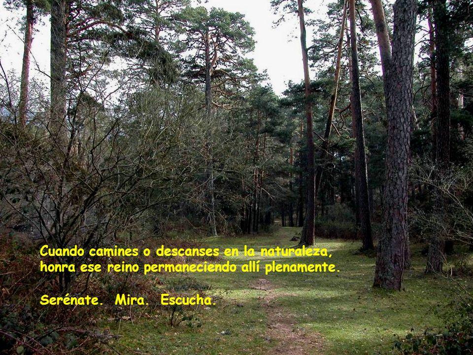 Cuando camines o descanses en la naturaleza, honra ese reino permaneciendo allí plenamente.