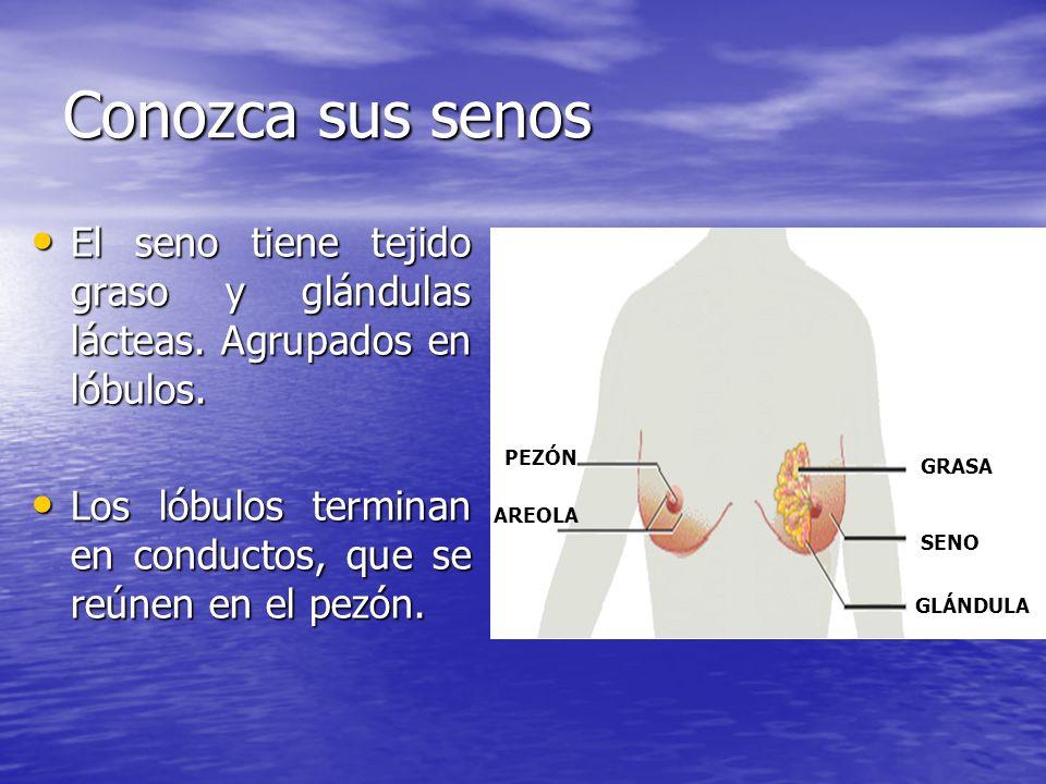 Conozca sus senos El seno tiene tejido graso y glándulas lácteas.