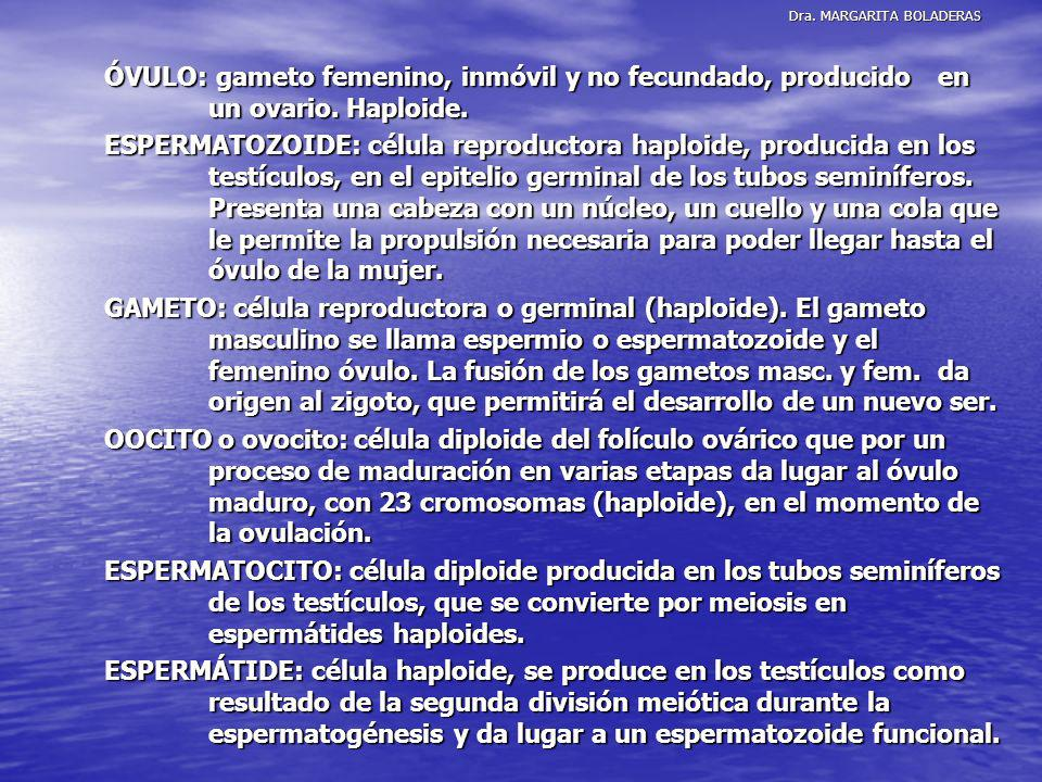 Dra. MARGARITA BOLADERAS ÓVULO: gameto femenino, inmóvil y no fecundado, producido en un ovario. Haploide. ESPERMATOZOIDE: célula reproductora haploid