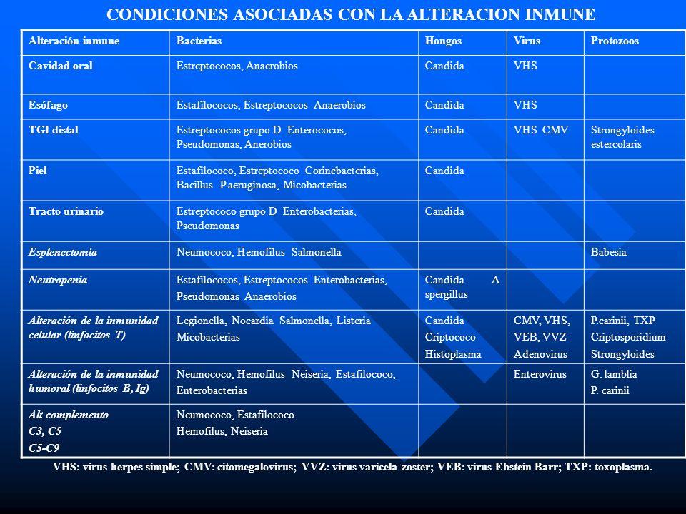 Alteración inmuneBacteriasHongosVirusProtozoos Cavidad oralEstreptococos, AnaerobiosCandidaVHS EsófagoEstafilococos, Estreptococos AnaerobiosCandidaVHS TGI distalEstreptococos grupo D Enterococos, Pseudomonas, Anerobios CandidaVHS CMVStrongyloides estercolaris PielEstafilococo, Estreptococo Corinebacterias, Bacillus P.aeruginosa, Micobacterias Candida Tracto urinarioEstreptococo grupo D Enterobacterias, Pseudomonas Candida EsplenectomíaNeumococo, Hemofilus SalmonellaBabesia NeutropeniaEstafilococos, Estreptococos Enterobacterias, Pseudomonas Anaerobios Candida A spergillus Alteración de la inmunidad celular (linfocitos T) Legionella, Nocardia Salmonella, Listeria Micobacterias Candida Criptococo Histoplasma CMV, VHS, VEB, VVZ Adenovirus P.carinii, TXP Criptosporidium Strongyloides Alteración de la inmunidad humoral (linfocitos B, Ig) Neumococo, Hemofilus Neiseria, Estafilococo, Enterobacterias EnterovirusG.