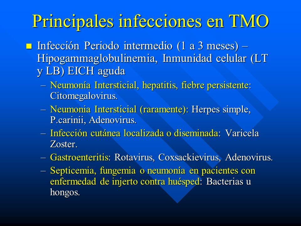 Principales infecciones en TMO Infección Periodo intermedio (1 a 3 meses) – Hipogammaglobulinemia, Inmunidad celular (LT y LB) EICH aguda Infección Periodo intermedio (1 a 3 meses) – Hipogammaglobulinemia, Inmunidad celular (LT y LB) EICH aguda –Neumonía Intersticial, hepatitis, fiebre persistente: Citomegalovirus.