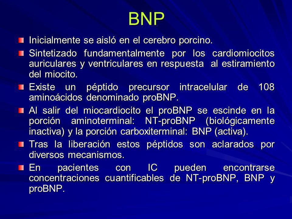 BNP Inicialmente se aisló en el cerebro porcino. Sintetizado fundamentalmente por los cardiomiocitos auriculares y ventriculares en respuesta al estir