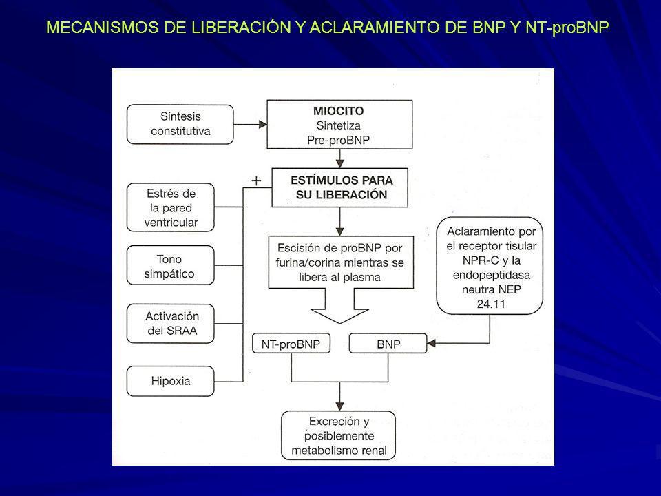MECANISMOS DE LIBERACIÓN Y ACLARAMIENTO DE BNP Y NT-proBNP