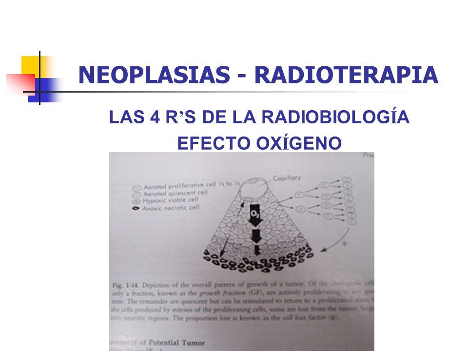 NEOPLASIAS - RADIOTERAPIA LAS 4 R S DE LA RADIOBIOLOG Í A EFECTO OX Í GENO