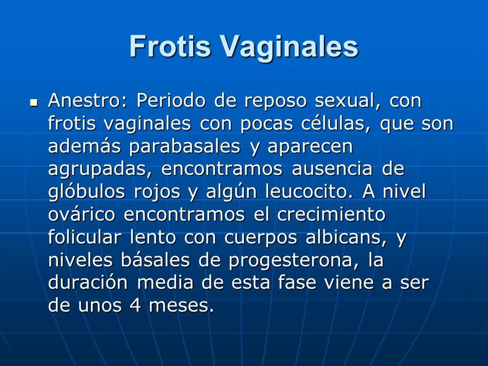 Frotis Vaginales Anestro: Periodo de reposo sexual, con frotis vaginales con pocas células, que son además parabasales y aparecen agrupadas, encontram