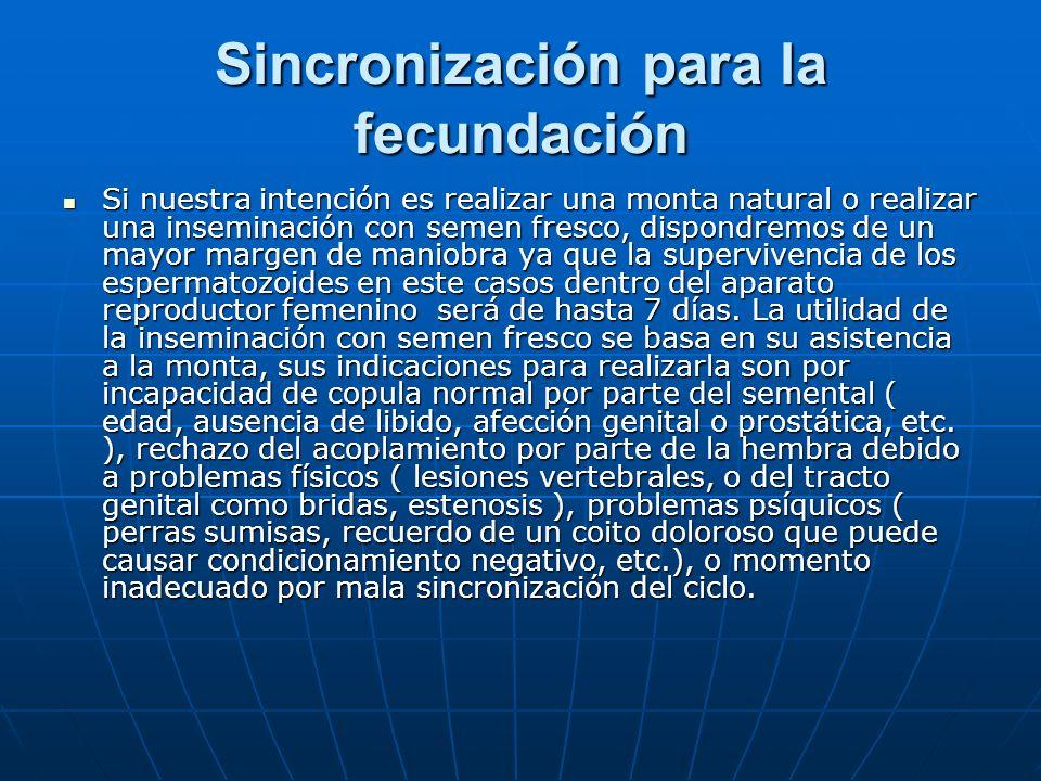 Sincronización para la fecundación Si nuestra intención es realizar una monta natural o realizar una inseminación con semen fresco, dispondremos de un