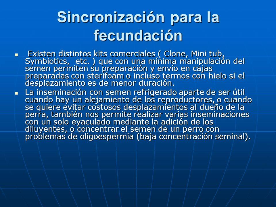 Sincronización para la fecundación Existen distintos kits comerciales ( Clone, Mini tub, Symbiotics, etc. ) que con una mínima manipulación del semen