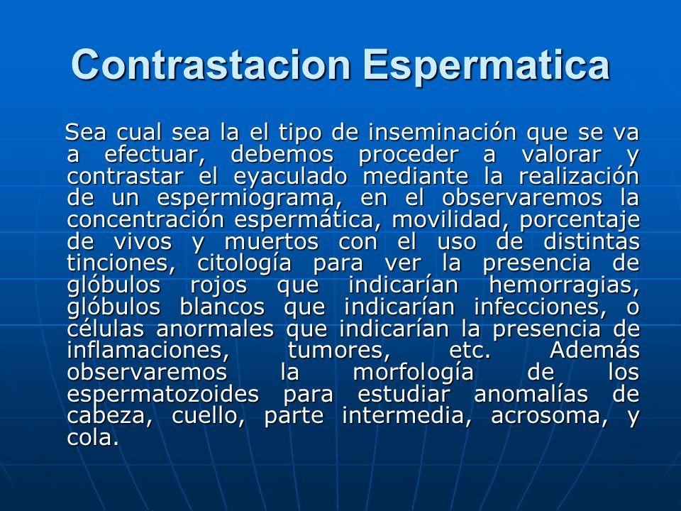 Contrastacion Espermatica Sea cual sea la el tipo de inseminación que se va a efectuar, debemos proceder a valorar y contrastar el eyaculado mediante