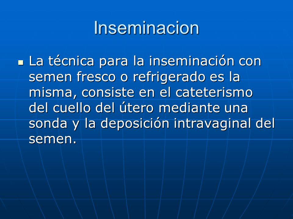 Inseminacion La técnica para la inseminación con semen fresco o refrigerado es la misma, consiste en el cateterismo del cuello del útero mediante una sonda y la deposición intravaginal del semen.