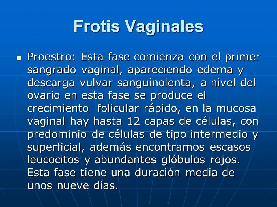 Frotis Vaginales Proestro: Esta fase comienza con el primer sangrado vaginal, apareciendo edema y descarga vulvar sanguinolenta, a nivel del ovario en