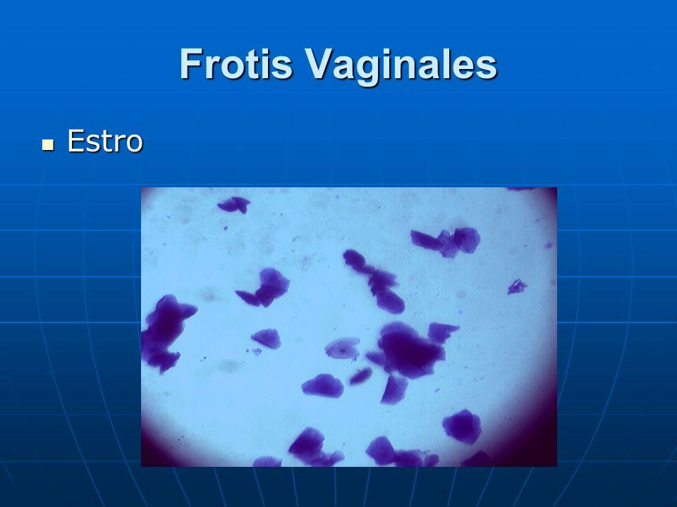 Frotis Vaginales Estro Estro