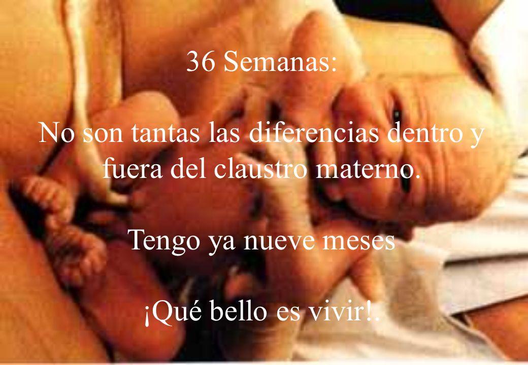 Nueve meses: Cumple 266 días Sale del seno materno y continúa su desarrollo.