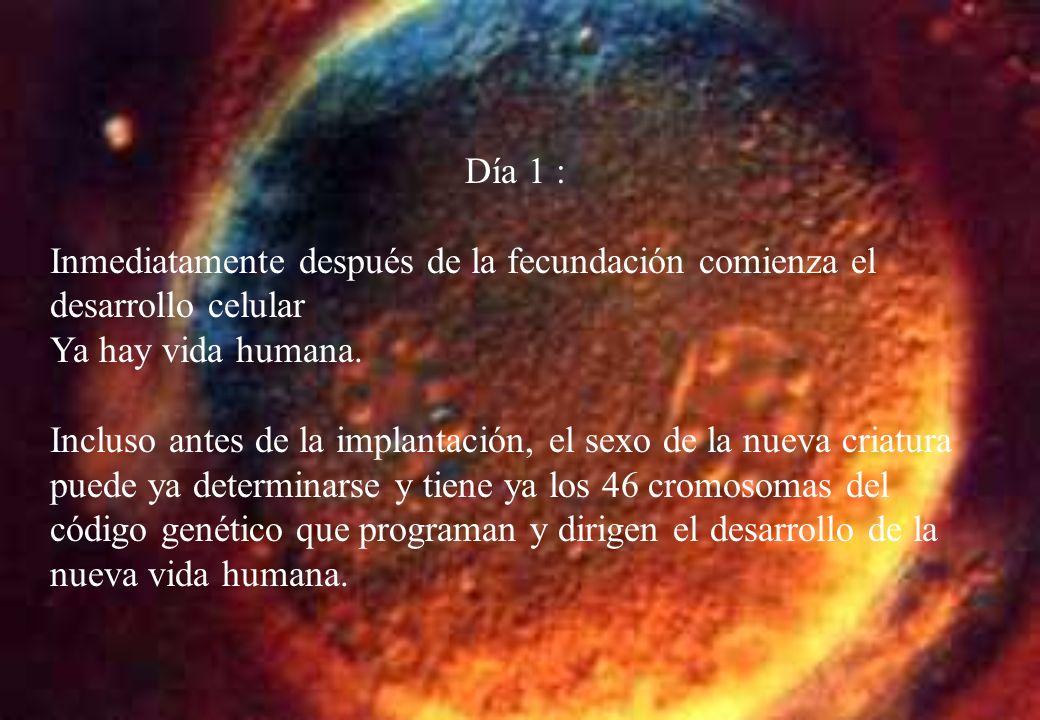 La ciencia confirma la existencia de la vida: Opiniones autorizadas Desde el momento mismo de la fecundación, desde el instante en que a la célula femenina le llega toda la información que se contiene en el espermatozoide, existe un ser humano Profesor Jeròme Lejeune.