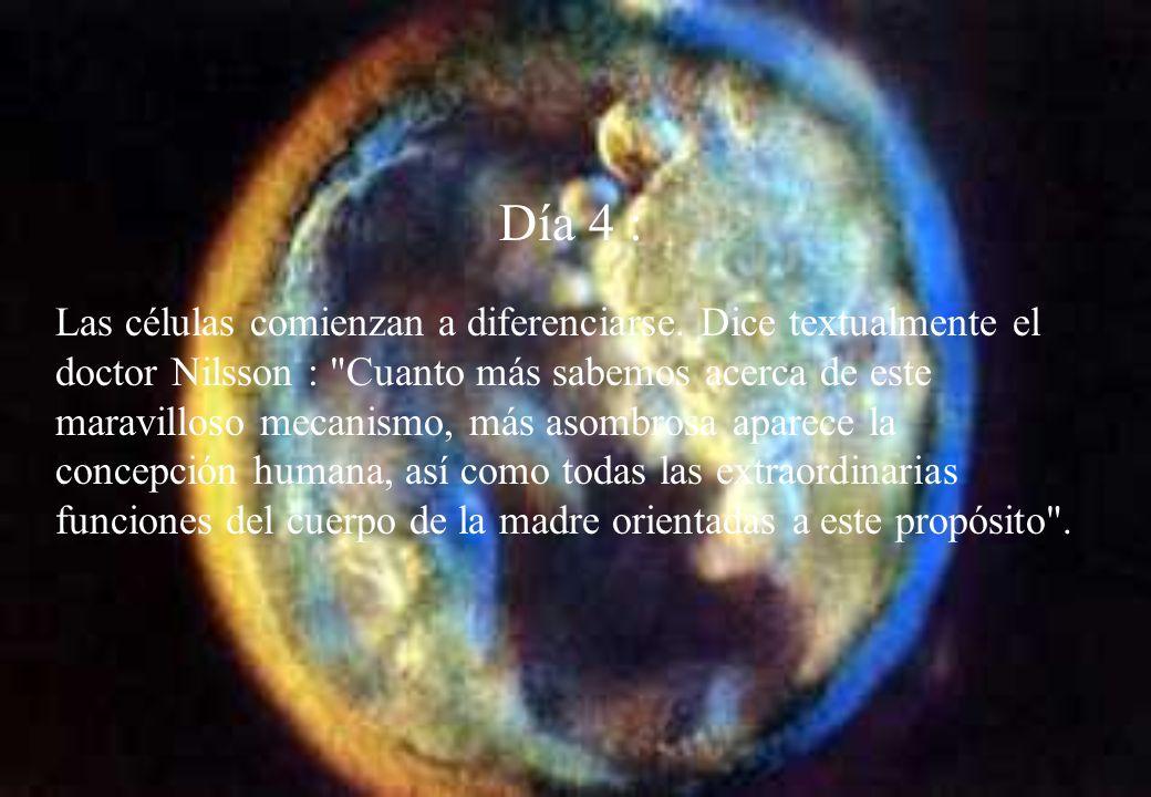 Día 1 : Inmediatamente después de la fecundación comienza el desarrollo celular Ya hay vida humana.