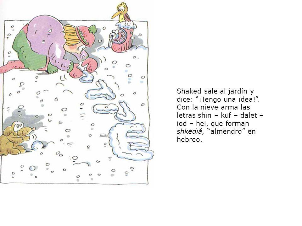 Shaked sale al jardín y dice: ¡Tengo una idea!. Con la nieve arma las letras shin – kuf – dalet – iod – hei, que forman shkediá, almendro en hebreo.