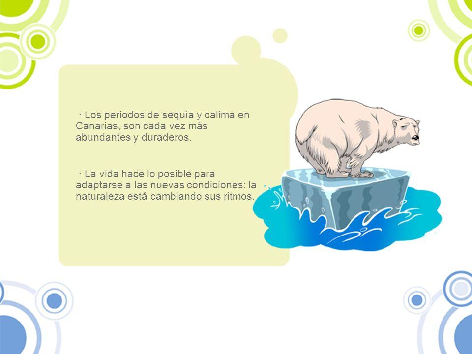 · Los periodos de sequía y calima en Canarias, son cada vez más abundantes y duraderos. · La vida hace lo posible para adaptarse a las nuevas condicio