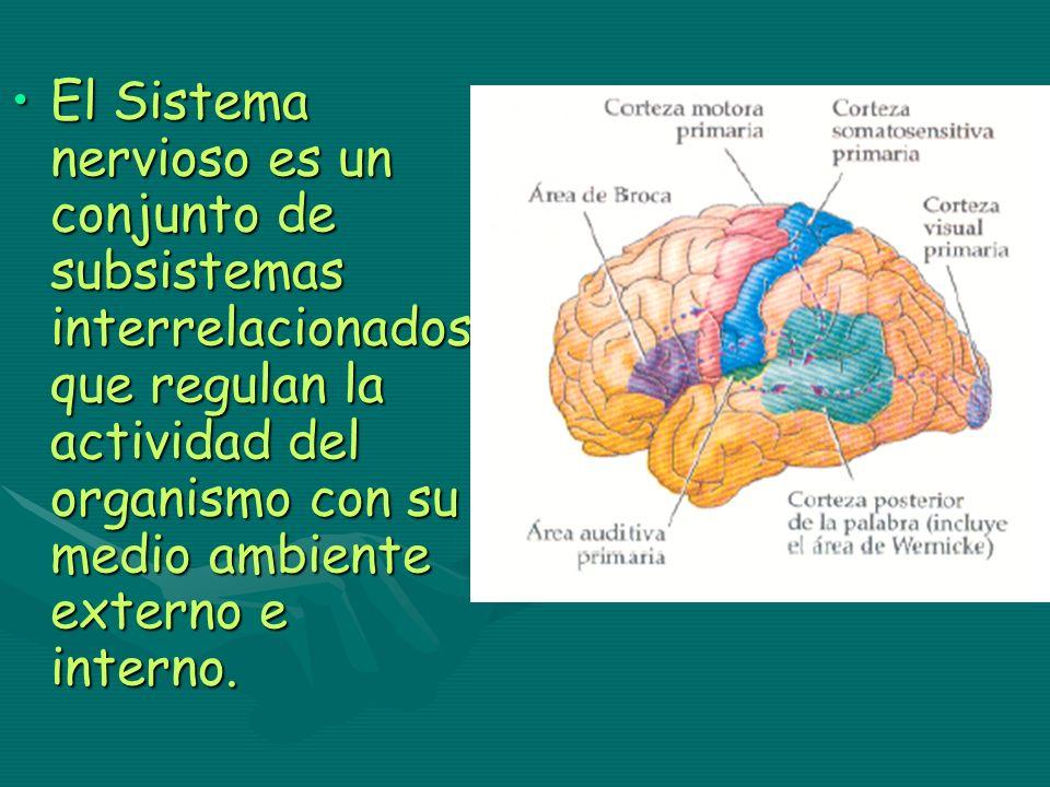 El Sistema nervioso es un conjunto de subsistemas interrelacionados que regulan la actividad del organismo con su medio ambiente externo e interno.El