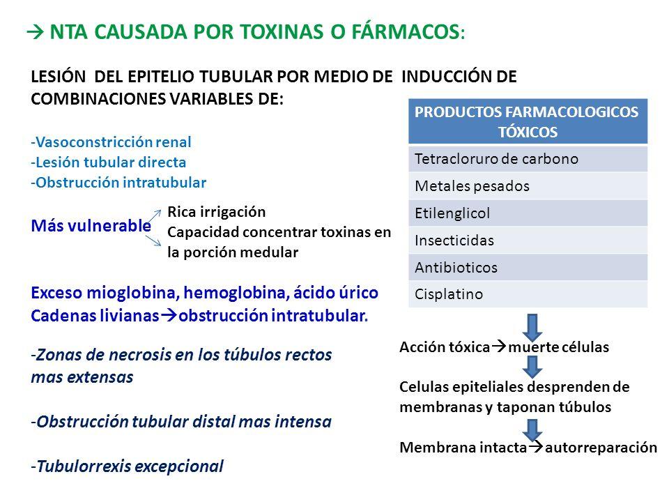 NTA CAUSADA POR TOXINAS O FÁRMACOS : LESIÓN DEL EPITELIO TUBULAR POR MEDIO DE INDUCCIÓN DE COMBINACIONES VARIABLES DE: -Vasoconstricción renal -Lesión tubular directa -Obstrucción intratubular Más vulnerable Exceso mioglobina, hemoglobina, ácido úrico Cadenas livianas obstrucción intratubular.