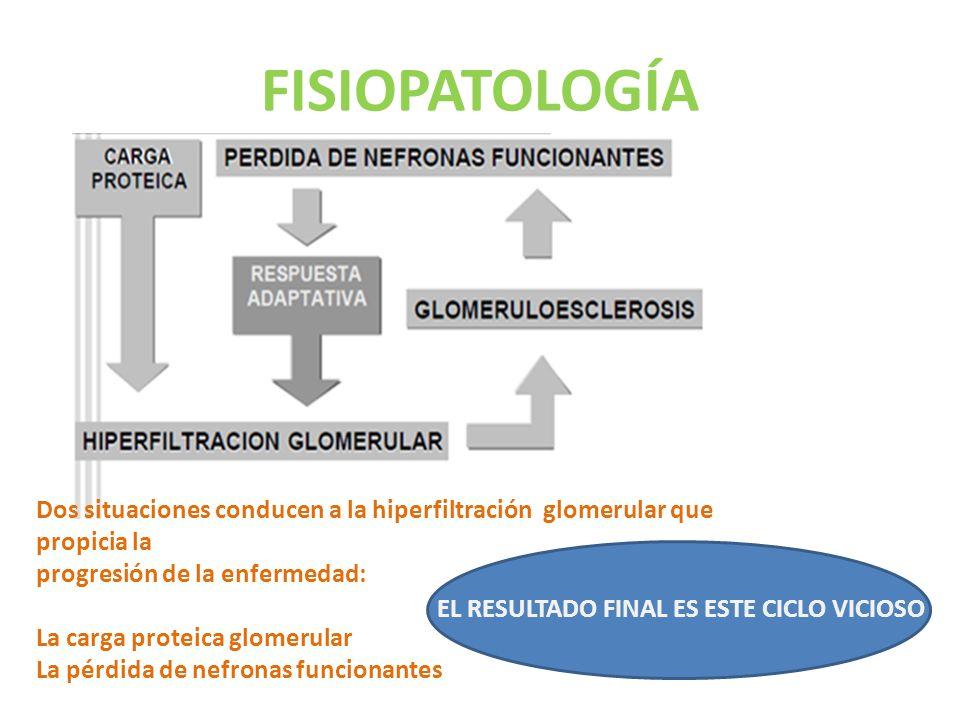 FISIOPATOLOGÍA Dos situaciones conducen a la hiperfiltración glomerular que propicia la progresión de la enfermedad: La carga proteica glomerular La pérdida de nefronas funcionantes EL RESULTADO FINAL ES ESTE CICLO VICIOSO