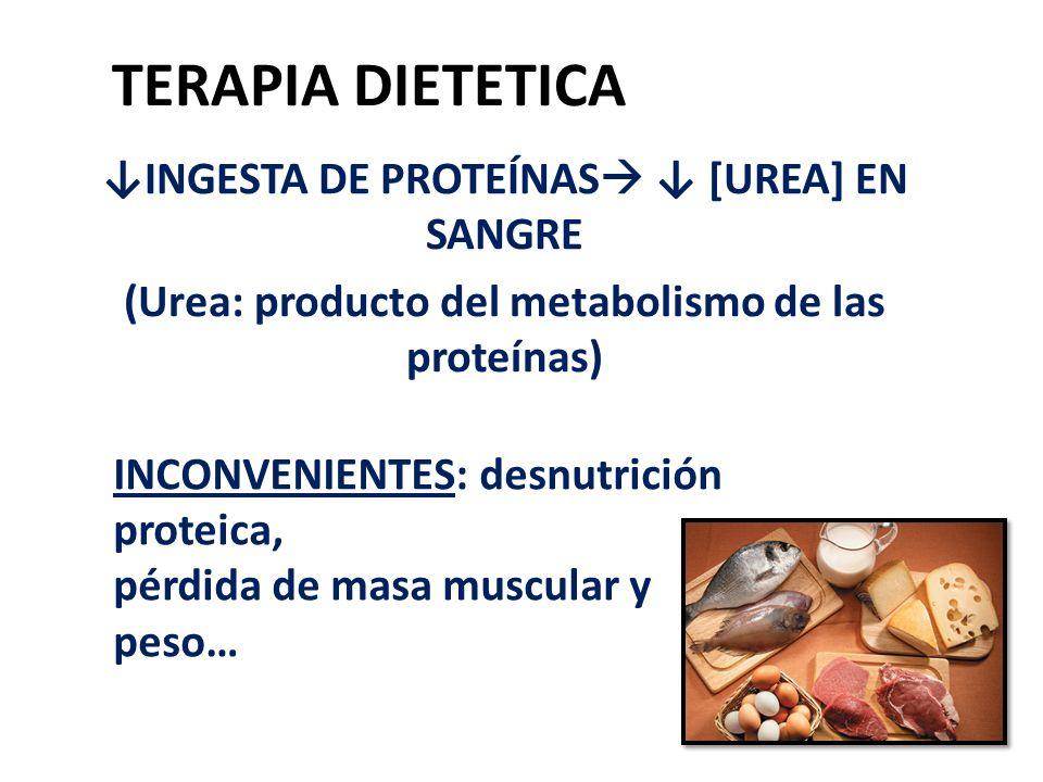 TERAPIA DIETETICA INGESTA DE PROTEÍNAS [UREA] EN SANGRE (Urea: producto del metabolismo de las proteínas) INCONVENIENTES: desnutrición proteica, pérdi