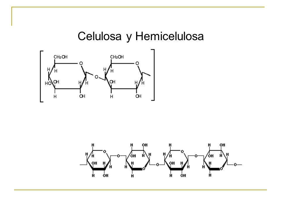 Celulosa y Hemicelulosa