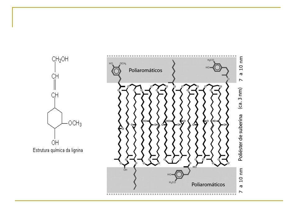 Fijación de sustancias orgánicas e inorgánicas Las sustancias que secuestran la fibra pueden simplemente atraparlas entre las redes que forman de forma natural las fibras o ligadas mediante enlaces de muy diversos tipos, lo que hace que la posibilidad de escape de estas sustancias sea mínima.