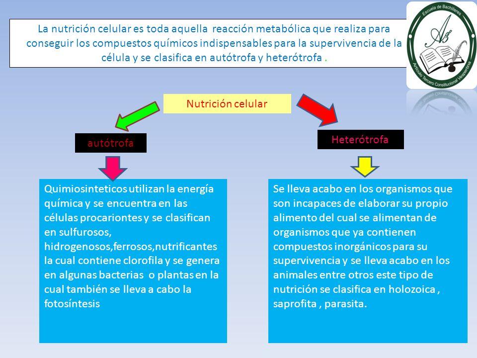 La nutrición celular es toda aquella reacción metabólica que realiza para conseguir los compuestos químicos indispensables para la supervivencia de la