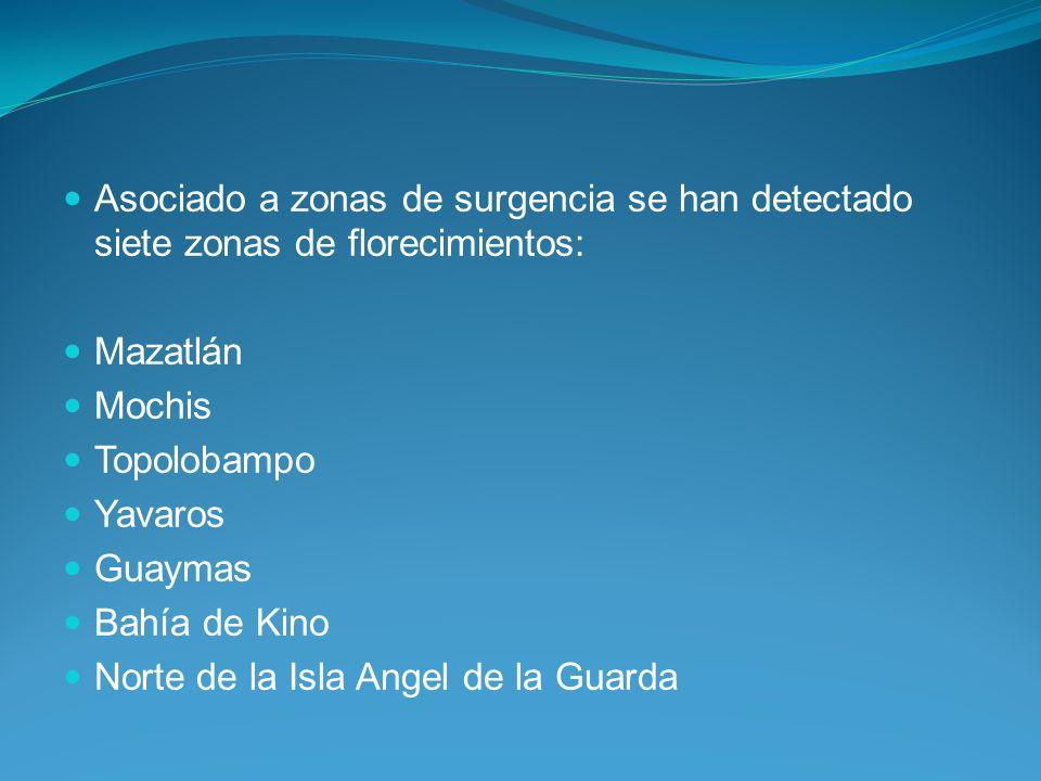 Asociado a zonas de surgencia se han detectado siete zonas de florecimientos: Mazatlán Mochis Topolobampo Yavaros Guaymas Bahía de Kino Norte de la Isla Angel de la Guarda