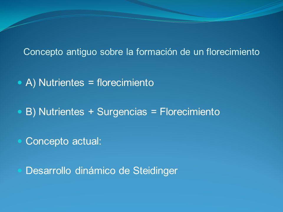 Concepto antiguo sobre la formación de un florecimiento A) Nutrientes = florecimiento B) Nutrientes + Surgencias = Florecimiento Concepto actual: Desarrollo dinámico de Steidinger