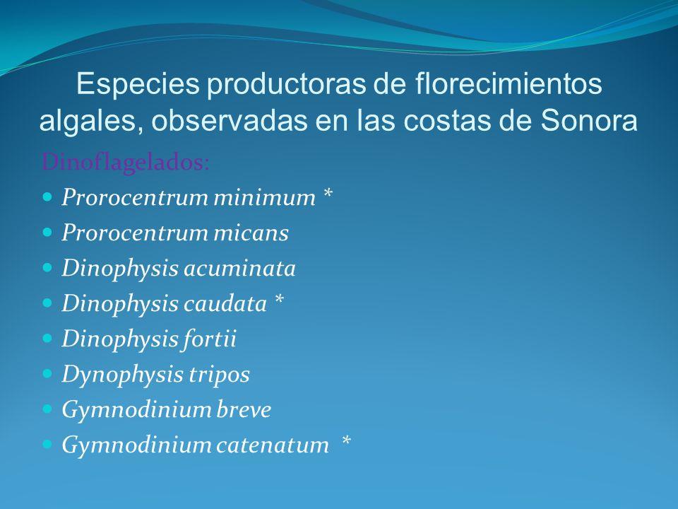 Akashihuo sanguineum * Noctiluca scientilans * Ceratium furca Ceratium dens Protoperidiniun quinquecorne * Linguludinium poliedrum ** Scrippsiella Trochoidea * Gonyaulax polyedra*