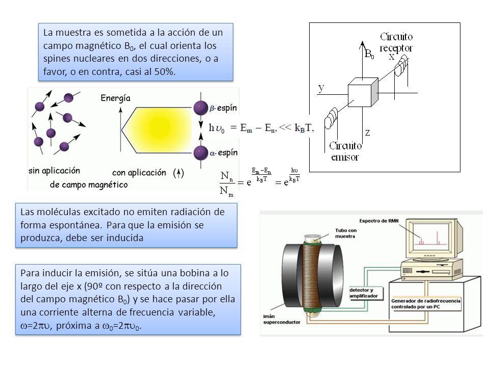 La muestra es sometida a la acción de un campo magnético B 0, el cual orienta los spines nucleares en dos direcciones, o a favor, o en contra, casi al