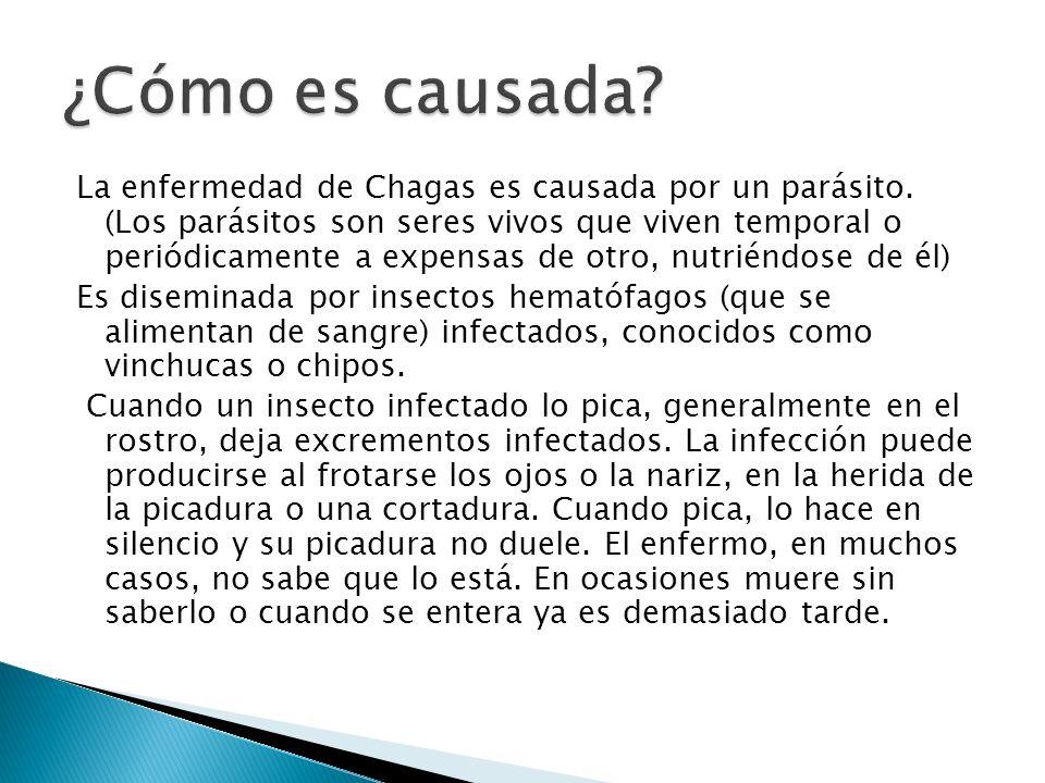 La enfermedad de Chagas es causada por un parásito. (Los parásitos son seres vivos que viven temporal o periódicamente a expensas de otro, nutriéndose