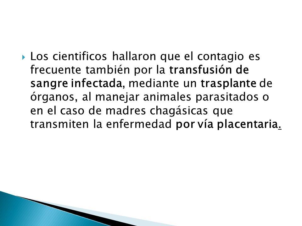 Los cientificos hallaron que el contagio es frecuente también por la transfusión de sangre infectada, mediante un trasplante de órganos, al manejar an