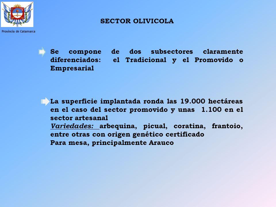 SECTOR OLIVICOLA Provincia de Catamarca Se compone de dos subsectores claramente diferenciados: el Tradicional y el Promovido o Empresarial La superfi