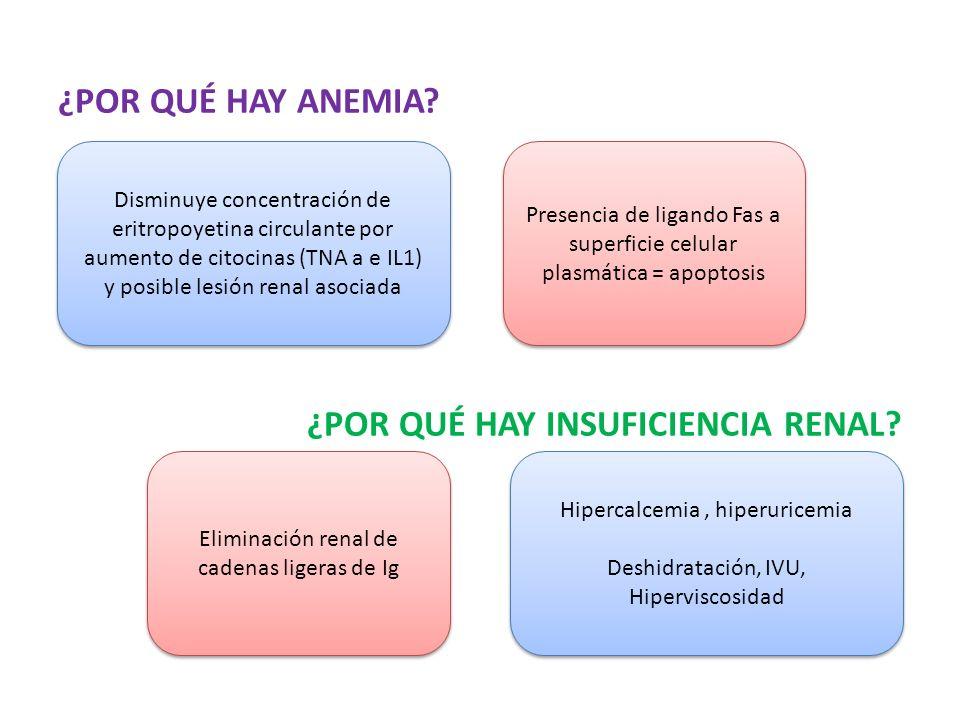 ¿POR QUÉ HAY ANEMIA? ¿POR QUÉ HAY INSUFICIENCIA RENAL? Disminuye concentración de eritropoyetina circulante por aumento de citocinas (TNA a e IL1) y p