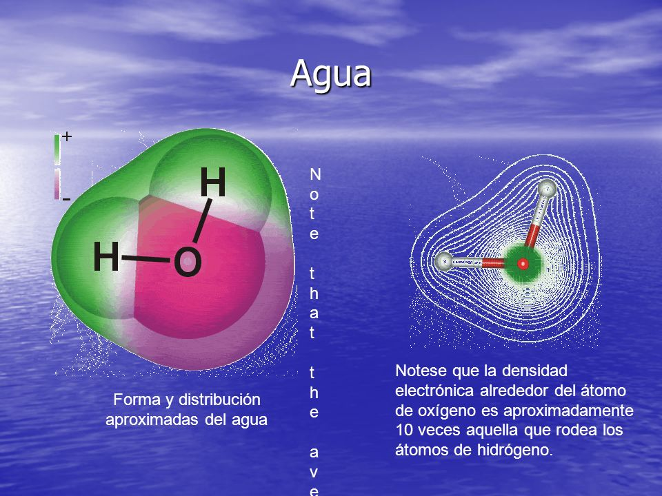 Agua Forma y distribución aproximadas del agua Note that the average electron density around the oxygen atom is about 10x that around the hydrogen ato