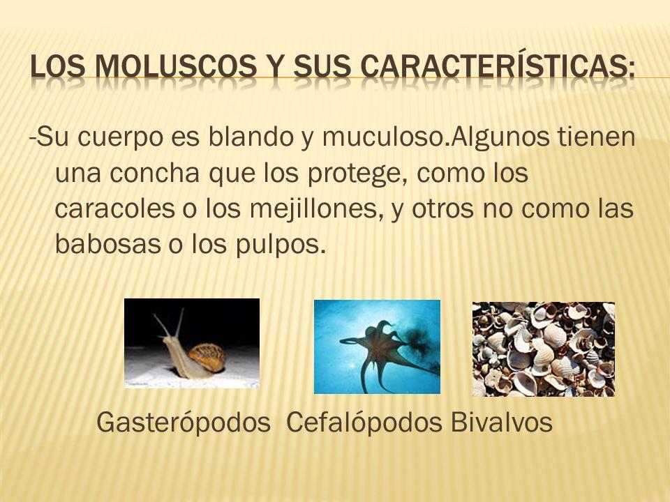 -Su cuerpo es blando y muculoso.Algunos tienen una concha que los protege, como los caracoles o los mejillones, y otros no como las babosas o los pulp