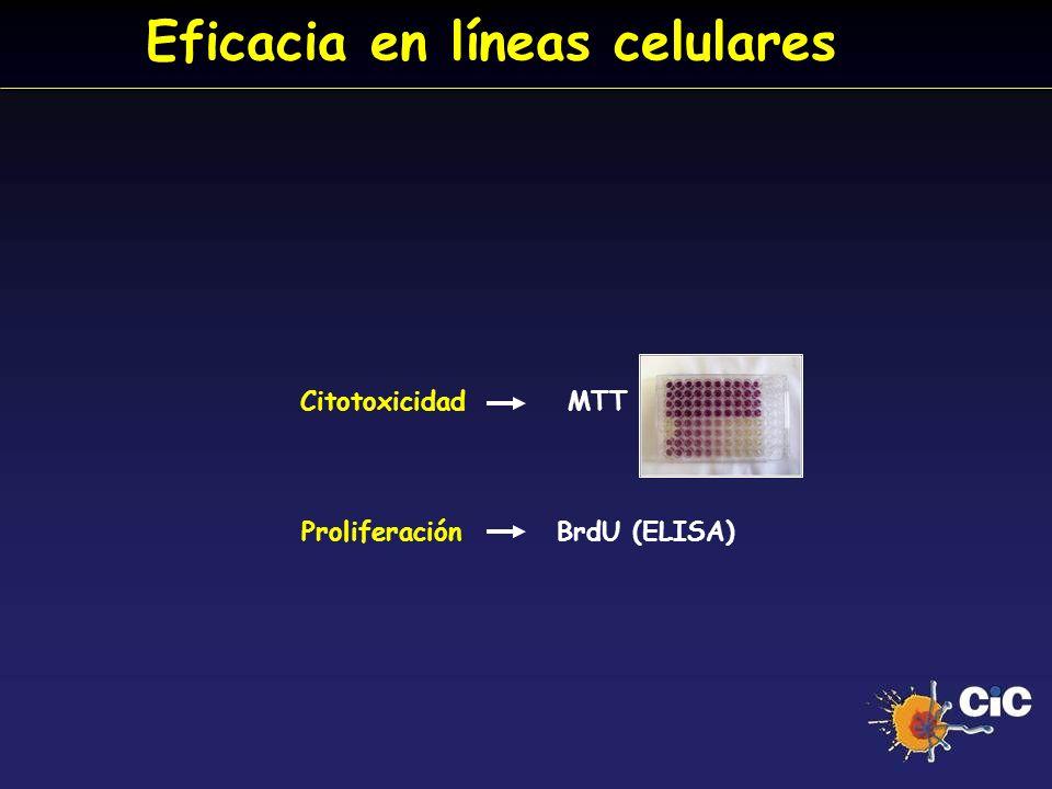 Eficacia en líneas celulares Citotoxicidad MTT Proliferación BrdU (ELISA)
