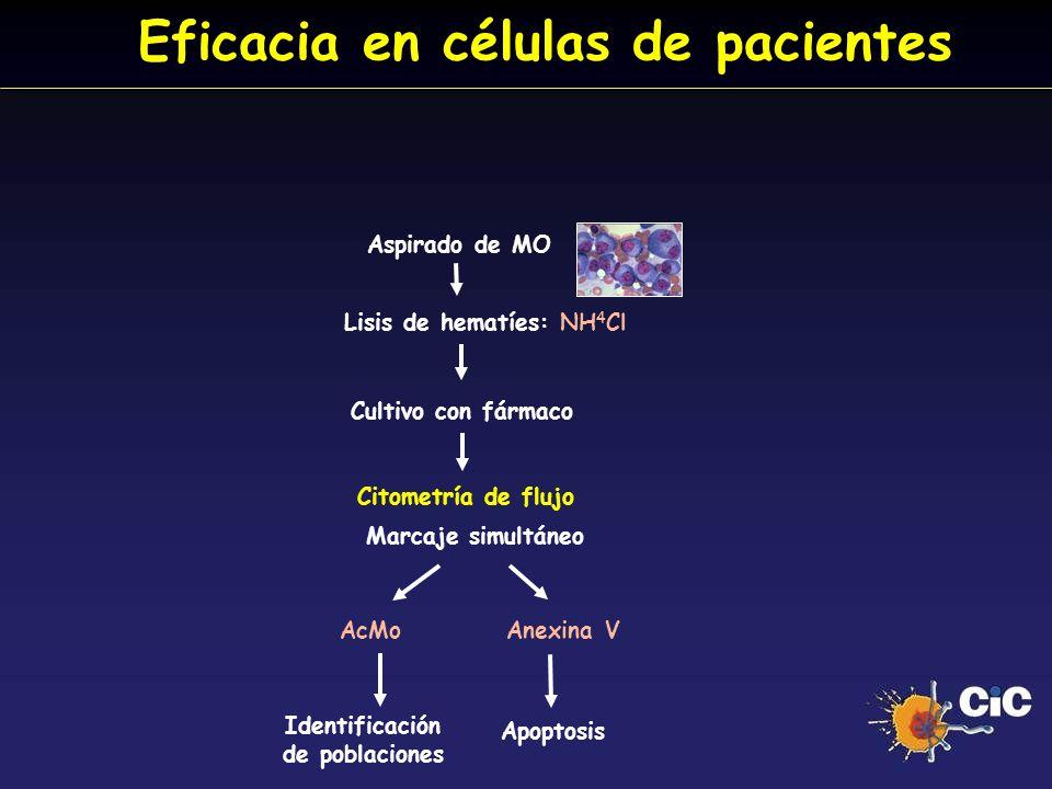 Eficacia en células de pacientes Aspirado de MO Citometría de flujo Cultivo con fármaco Marcaje simultáneo AcMo Anexina V Apoptosis Identificación de