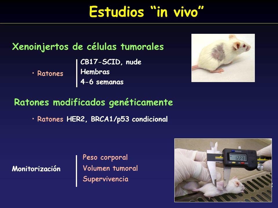 Estudios in vivo Ratones CB17-SCID, nude Hembras 4-6 semanas Xenoinjertos de células tumorales Monitorización Peso corporal Volumen tumoral Superviven