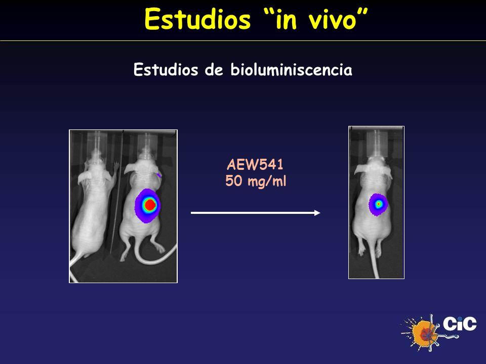 Estudios in vivo Estudios de bioluminiscencia AEW541 50 mg/ml