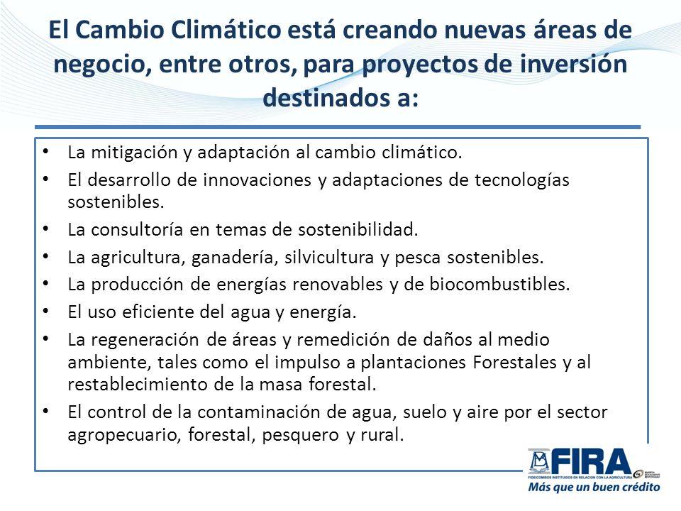 El Cambio Climático está creando nuevas áreas de negocio, entre otros, para proyectos de inversión destinados a: La mitigación y adaptación al cambio