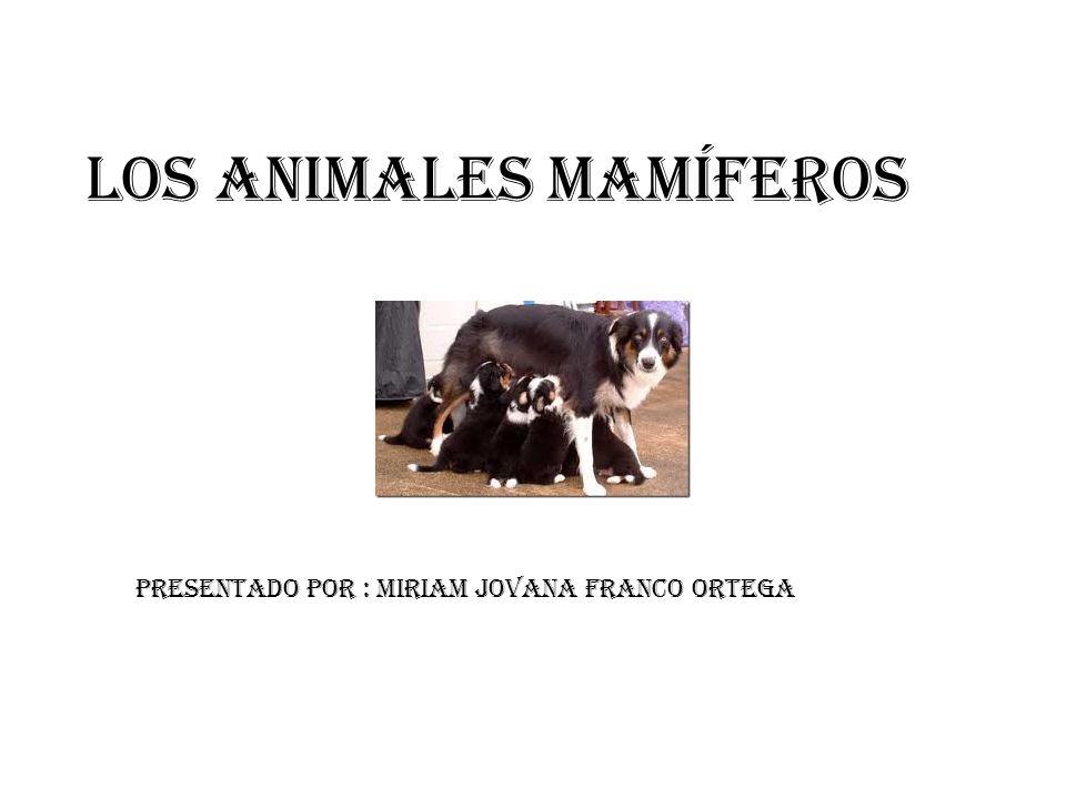 Los animales mamíferos Presentado por : Miriam Jovana Franco Ortega