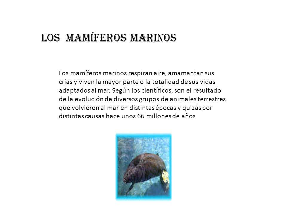 Los mamíferos marinos respiran aire, amamantan sus crías y viven la mayor parte o la totalidad de sus vidas adaptados al mar. Según los científicos, s