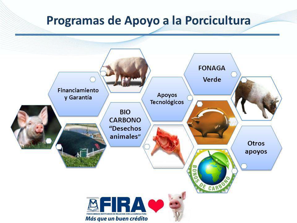 Programas de Apoyo a la Porcicultura Financiamiento y Garantía BIO CARBONO Desechos animales Apoyos Tecnológicos FONAGA Verde Otros apoyos