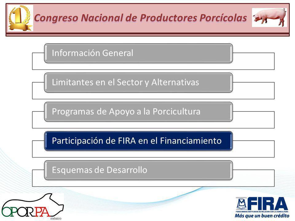 Información GeneralLimitantes en el Sector y AlternativasProgramas de Apoyo a la PorciculturaParticipación de FIRA en el FinanciamientoEsquemas de Des